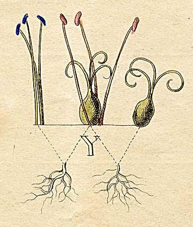 bitkilerin siniflandirilmasinda